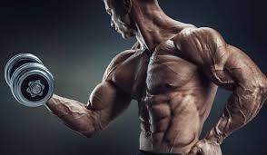 best-biceps-workout-bulksupplementsdirect-2