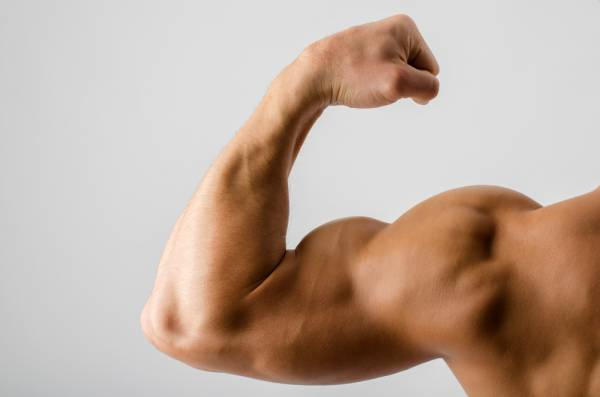 how-to-build-arm-muscles-fast-bullksupplementsdirect