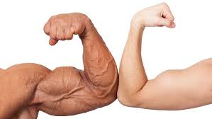 ultimate-guide-to-arm-training-bulksupplementsdirect-6
