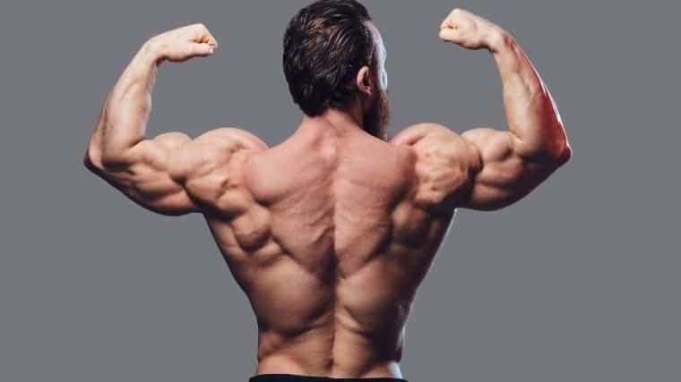 ultimate-guide-to-back-training-bulksupplementsdirect-5